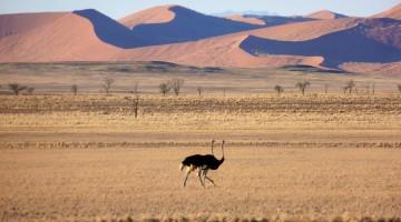 Namibi Dunes. Photo by Maureen Littlejohn.