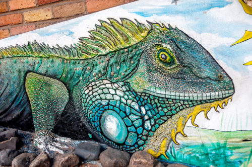 Iguana mural by Ernesto Garrigos in the Rio Cuale neighborhood