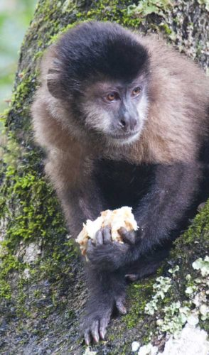 A monkey at Iguazu National Park