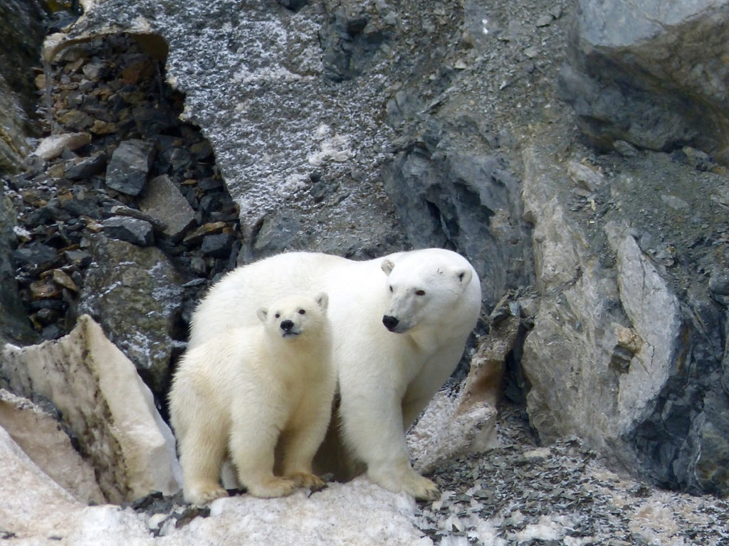 Mom and her cub on Herald Island