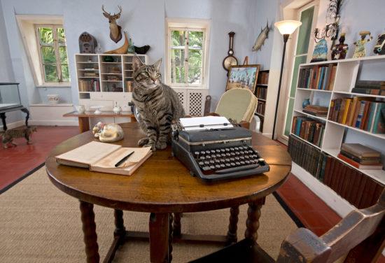 Cat next to typewriter